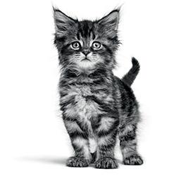 Conseils chaton