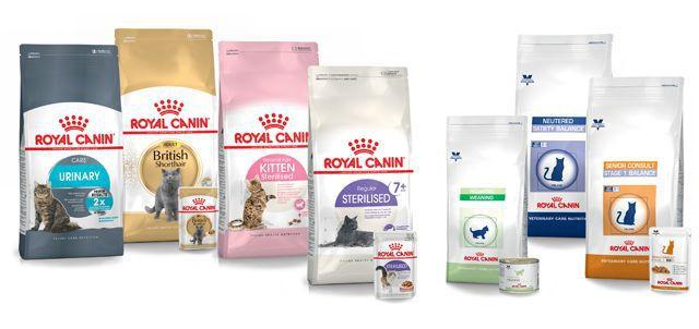 Découvrez la nutrition santé pour votre chat sur notre nouvelle boutique en ligne