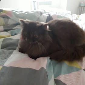 DE NOUCHKAOWL CAT