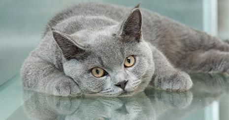 Le mode d'alimentation du chat au quotidien