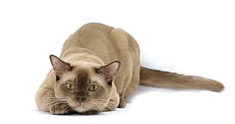 Aliments & médicaments non consommables pour le chat