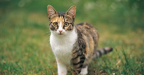 L'identification du chat, un geste sécuritaire