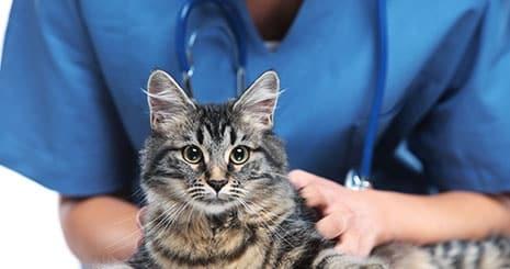 L'anesthésie du chat : c'est bien plus qu'une piqûre
