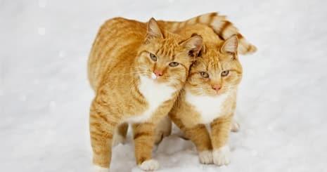 https://www.wikichat.fr/wp-content/uploads/sites/2/57ab351b4b133_faciliter-cohabitation-animaux.jpg