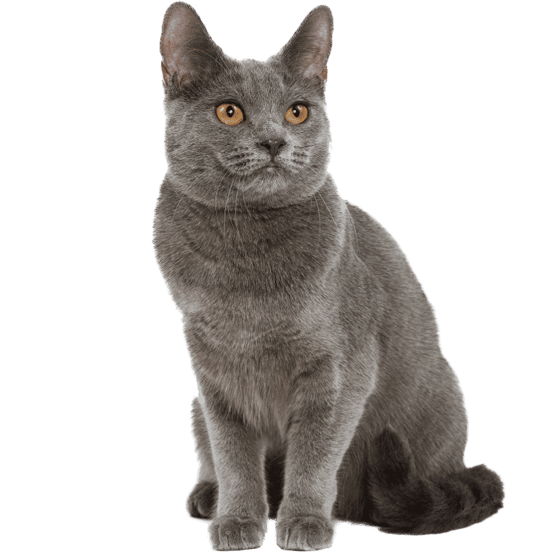 https://www.wikichat.fr/wp-content/uploads/sites/2/CHARTREUX.png