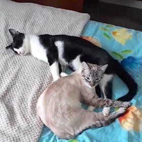 Zaho et Félix