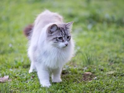 Transpiration du chat