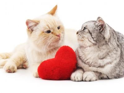Adopter un chat ou un chaton à adopter: tout savoir sur l'adoption