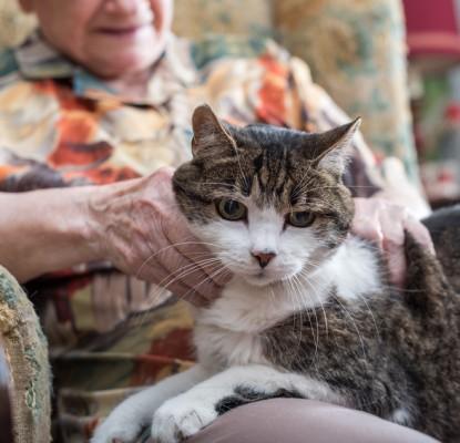Mon chat prend de l'âge