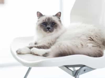 Tartre à surveiller chez le chat
