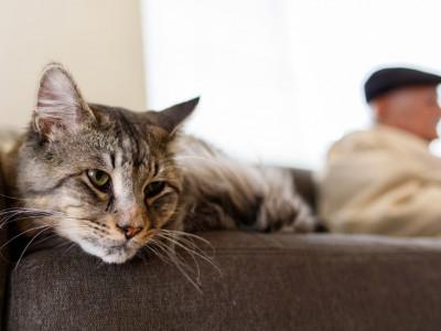 Le marquage du territoire chez le chat