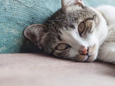 Les pièges de la maison pour le chat