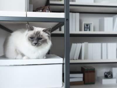 Adapter le mobilier à la condition physique du chat