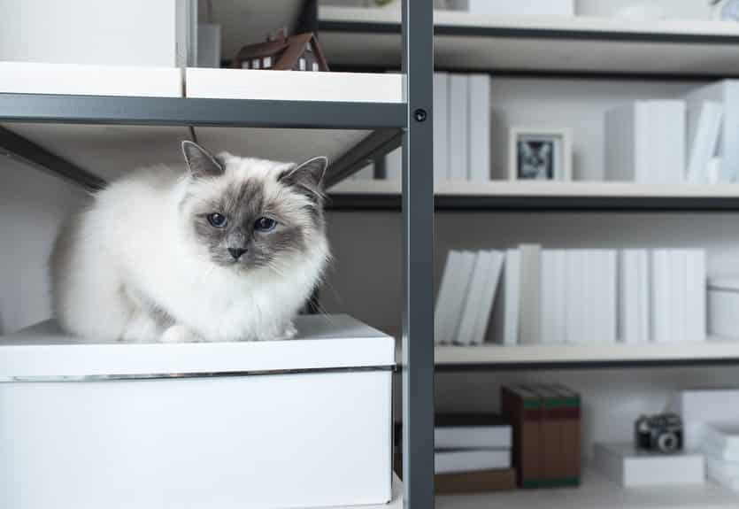 Adapter le mobilier à la condition physique du chat