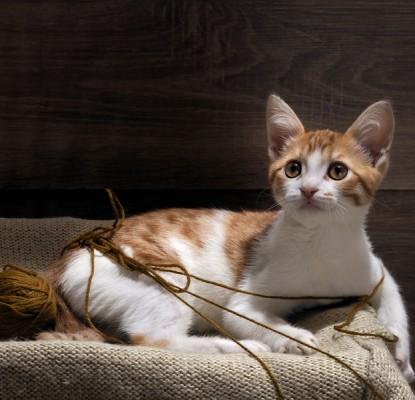 Les boules de poils du chat