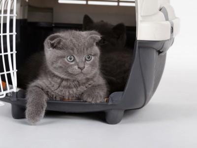 Voyager avec son chat et partir en vacances avec son chat