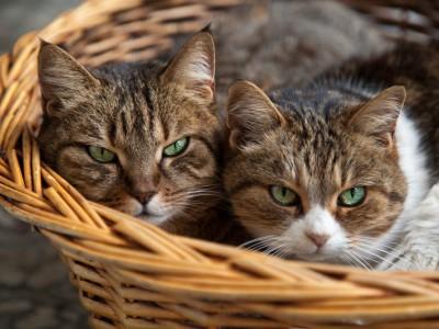 La cohabitation entre plusieurs chats