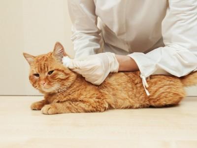 Comment entretenir un vieux chat?