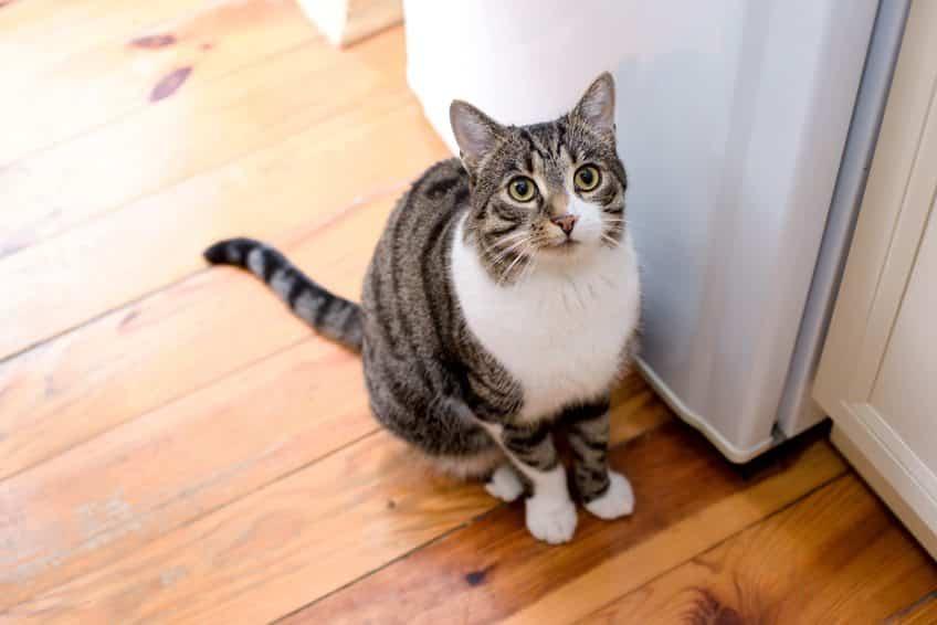Mon chat m 39 attaque les jambes que faire wikichat - Mon chaton fait pipi sur mon lit ...