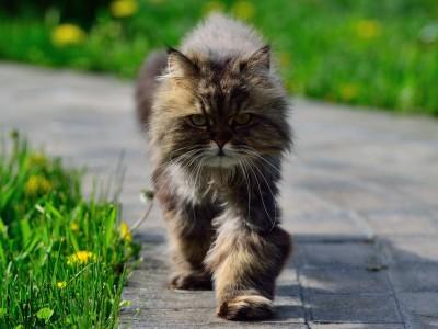 Chat âgé: Comment s'occuper de mon chat agé au quotidien