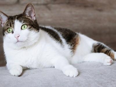 Comment nourrir une chatte en gestation ?