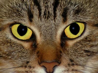 Vue de chat