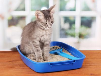 Marquage facial et marquage urinaire du chat