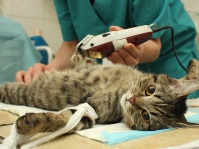 Stérilisation du chat : Pourquoi faire stériliser mon chat