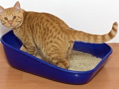 La propreté du chat et du chaton : Avoir un chat propre, litière