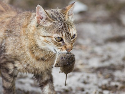 Le chat et la souris