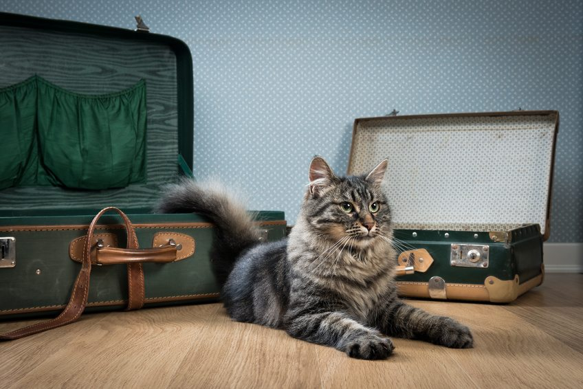 Puis-je voyager avec mon chat ?