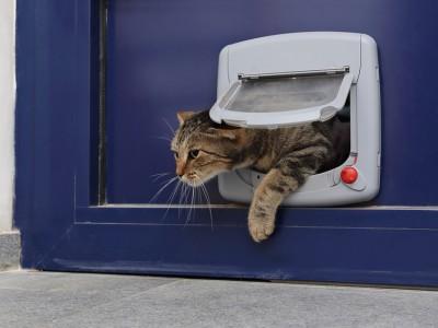 Apprendre au chat à utiliser la chatière