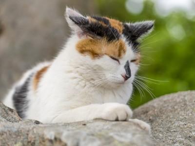 Les intoxications et empoisonnements du chat