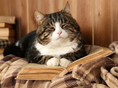Améliorer le bien-être du chat sénior