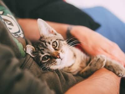 Chaton : Tout savoir pour réussir la croissance de mon chaton.