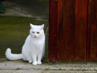Trouver un nom de chat : Tous les prénoms de chats