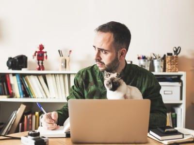 Les différences entre le chat et l'homme