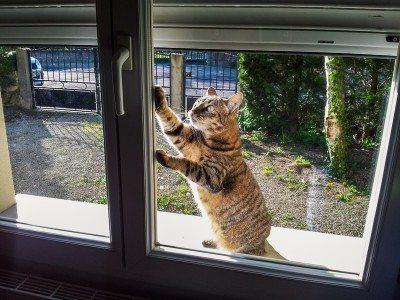Faut-il laisser sortir le chat?