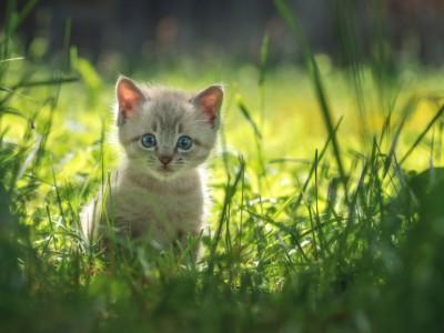 Préparer l'arrivée d'un chaton et accueillir un chaton