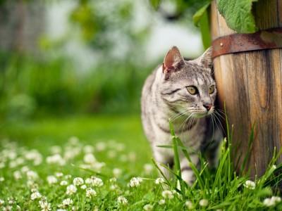 Pourquoi les chats pétrissent-ils ?