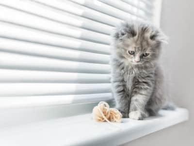 Comment choisir un chaton?