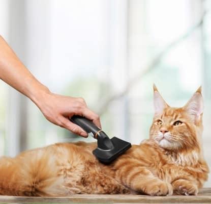 Entretien du pelage du chat. Comment brosser mon chat?