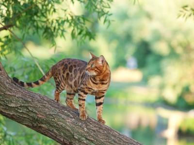 Le territoire du chat
