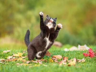 Pourquoi le chaton s'agite-t-il brusquement?