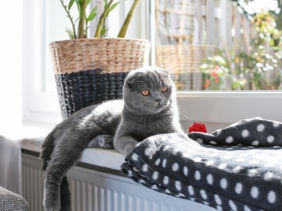 La journée d'un chat