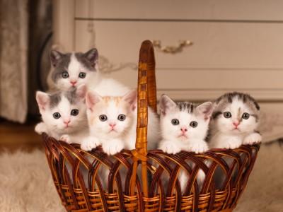 Ma chatte va avoir des chatons: Dossier spécial