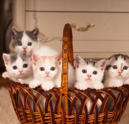 Ma chatte va avoir des chatons : dossier spécial