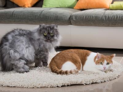 L'espace de vie du chat