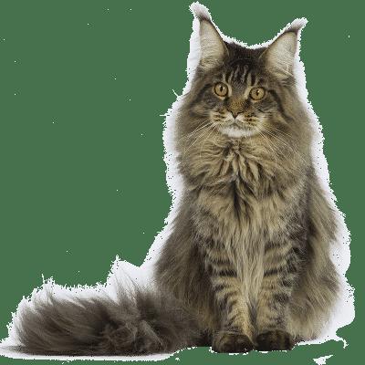 donne chat adulte paris
