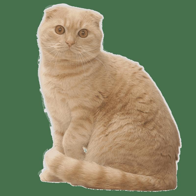 Fiche Femelle Cat